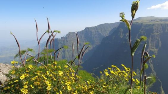 Simien Views-003